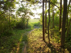 A path to the salt marsh
