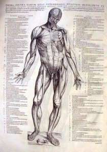 The Fabric of the Human Body, by the great Andreas Vesalius